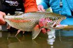 Kanektok river leopard rainbow