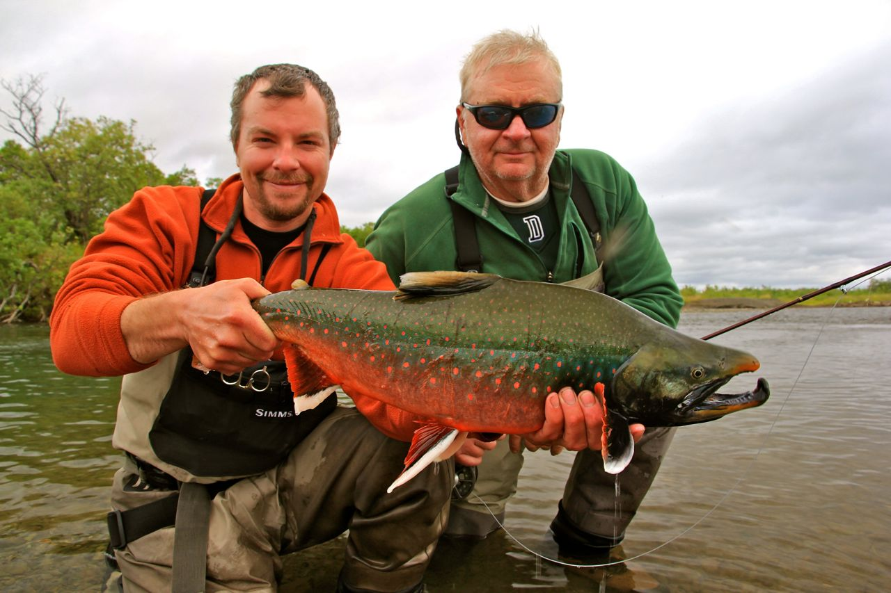 Fly fishing for leopard rainbow trout and dolly varden on for Dolly varden fish