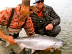Kanektok king salmon action